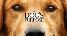 A DOG'S PURPOSE tells the story of many dogs